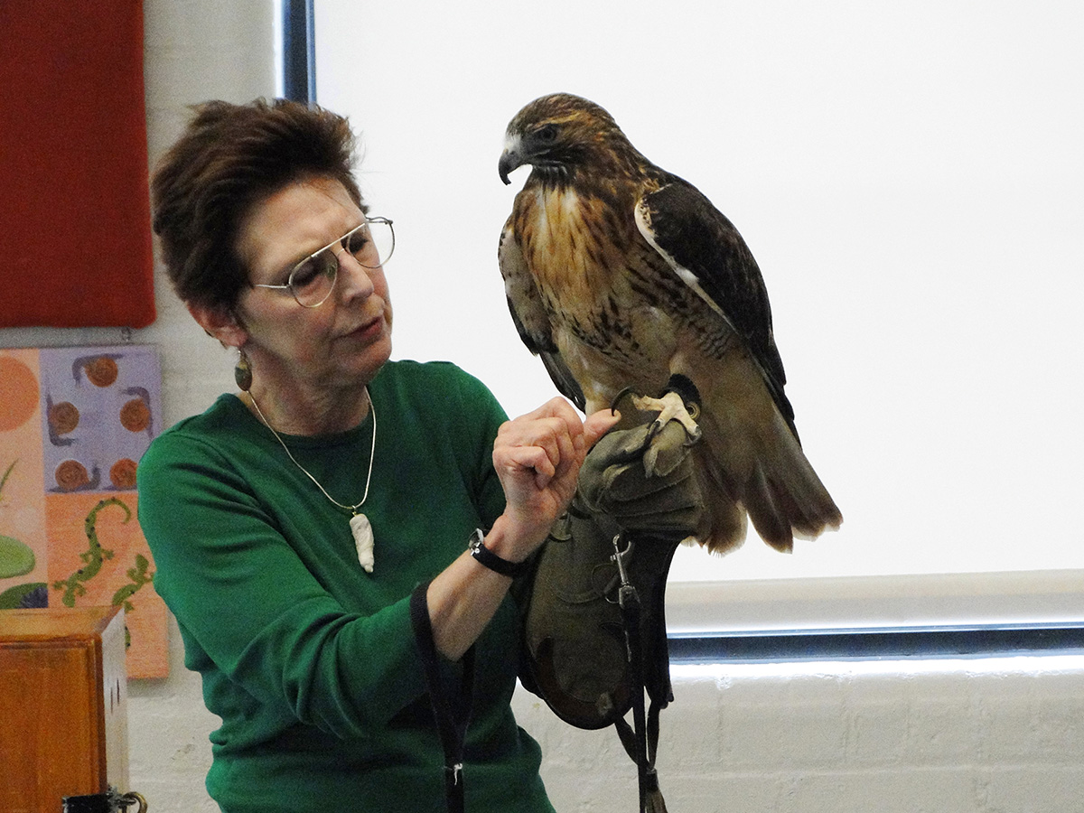wingmasters-hawk
